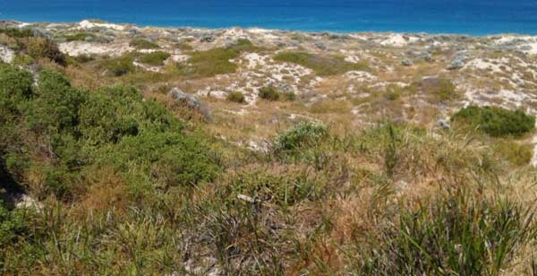 assessment-of-the-trigg-island-to-scarborough-beach-coastal-dunes-fig-1
