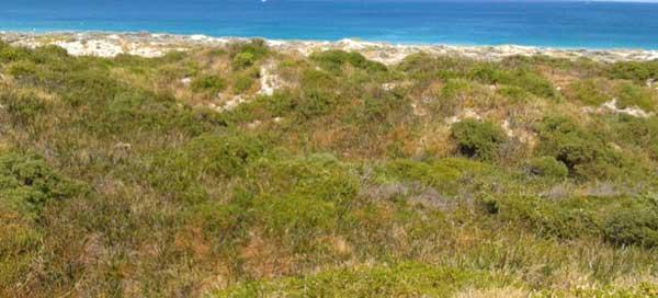 assessment-of-the-trigg-island-to-scarborough-beach-coastal-dunes-fig-2